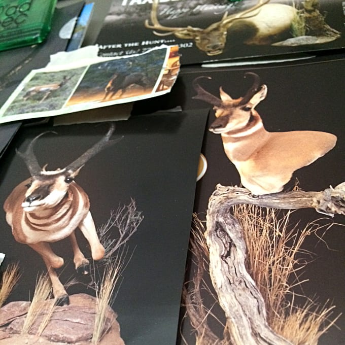 Antelope and Elk Photo Collage